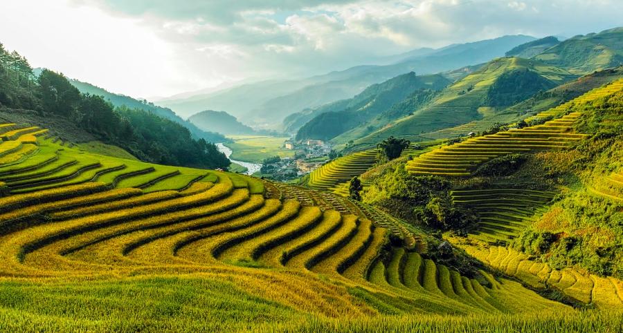 mu cang chai rice paddies